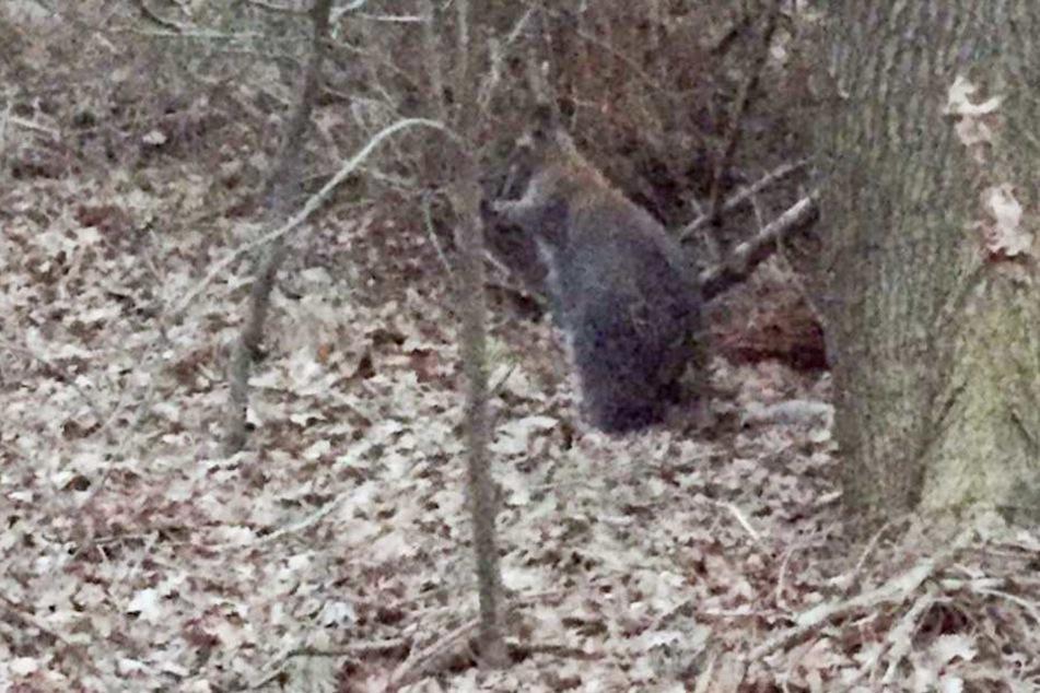 Mitten im Wald wurde das Tier gesehen.