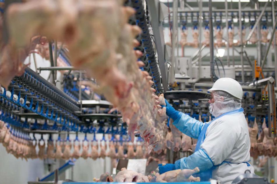 Geflügelfleisch wird verarbeitet. (Symbolbild)
