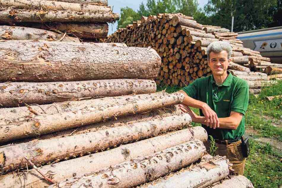 Holzpreis im Keller: Borkenkäfer-Plage lässt Forstleute verzweifeln