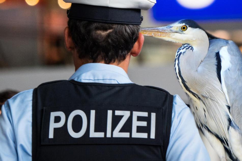 Warum denn das? Polizei verhaftet Graureiher