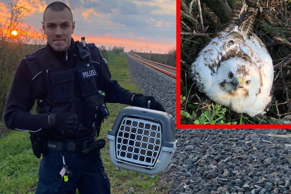 Diese Beamten hatten einen Vogel: Bundespolizisten retten kleinen Bussard
