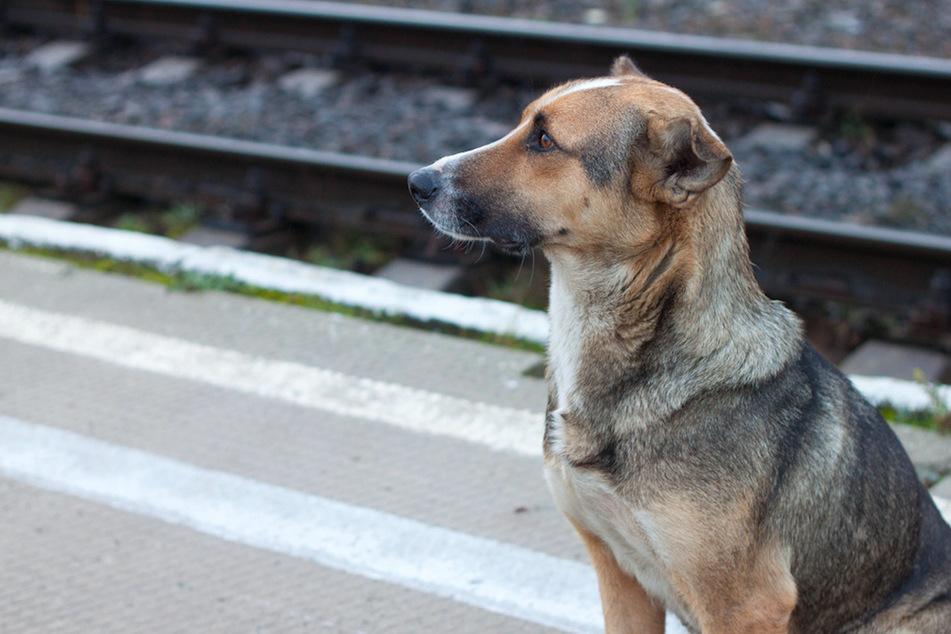 Hund völlig aufgelöst: Herrchen liegt mit 4,8 Promille am Bahnsteig