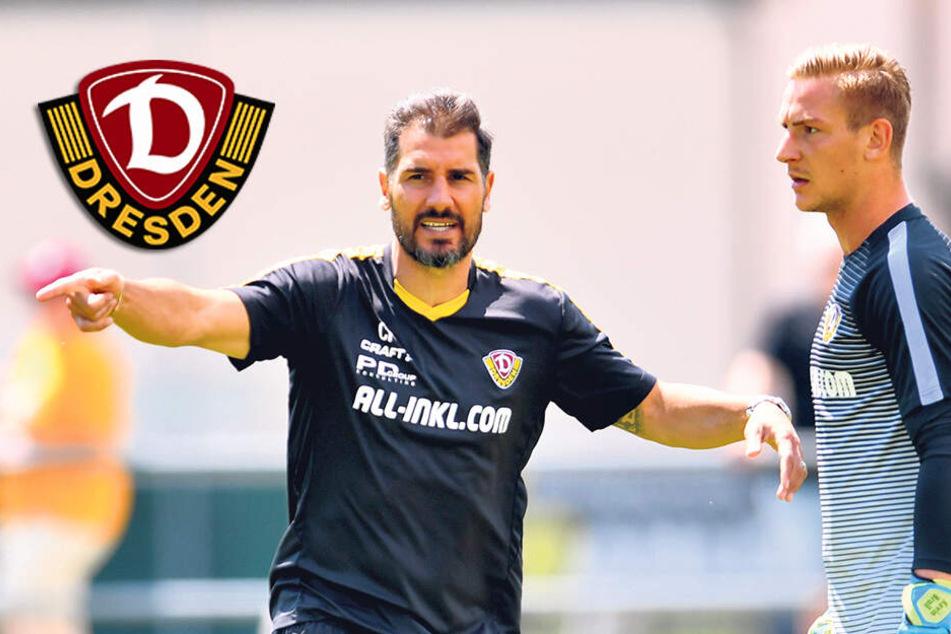 "Dynamo-Coach Fiel lobt Broll: ""Das wird ihm guttun!"""