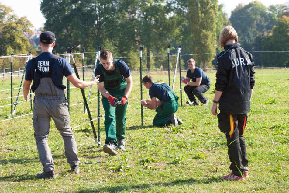 So geht Weidezaun: Das estnische Team ist fast fertig, die strammen Jungs ziehen gerade den Elektrodraht um die Streben.