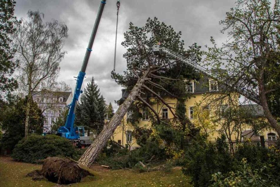 In Freiberg stürzte ein Baum auf ein Haus.