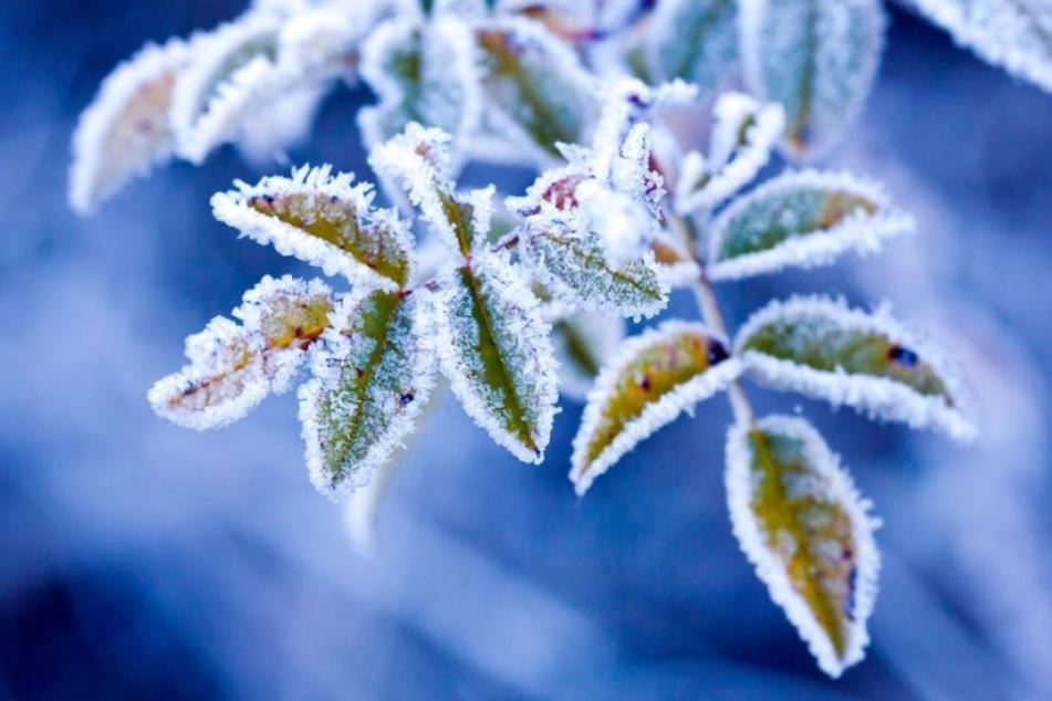 Die richtige Eiseskälte wartet noch auf sich. Dennoch wird es im Freistaat am Wochenende ordentlich frostig.