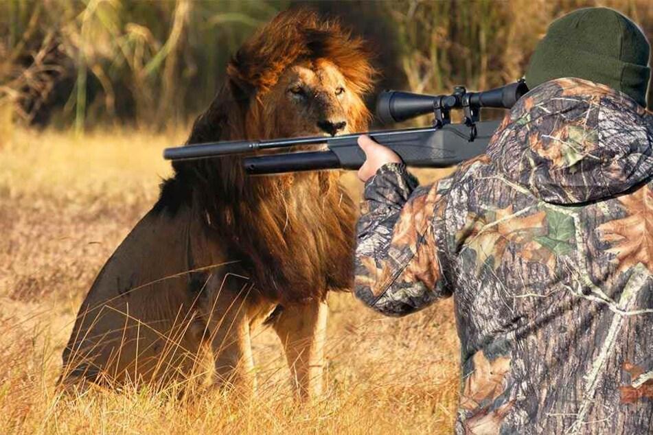 Vom Jäger zum Opfer: Mann wird bei Löwenjagd erschossen
