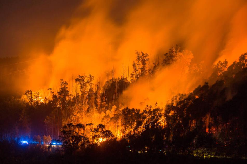Horror-Waldbrand in Portugal: Zahl der Toten steigt auf 64