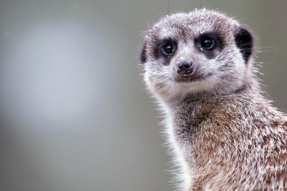 So viele Besucher waren im vergangenen Jahr im Tierpark Hellabrunn