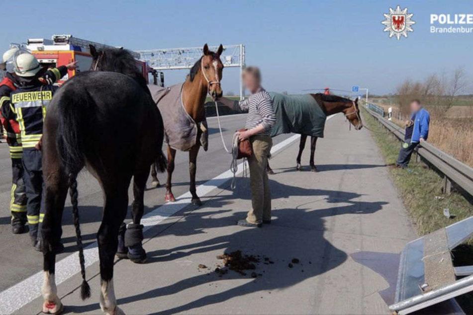 Die drei Pferde wurden tierärztlich untersucht und später in einem Gestüt untergebracht.