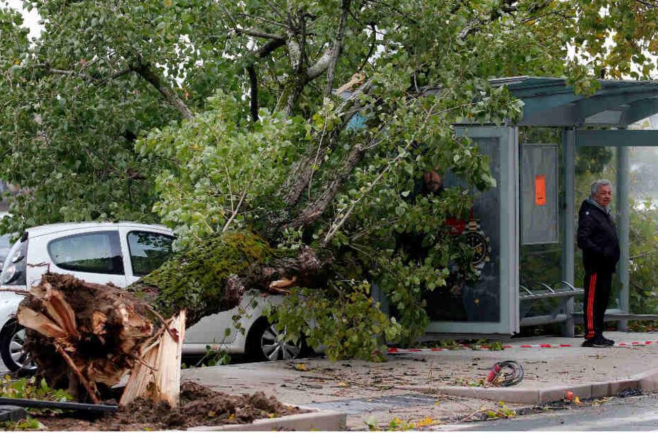 Ein Baum ist bei stürmischem Wetter auf ein Bus-Wartehäuschen gestürzt.