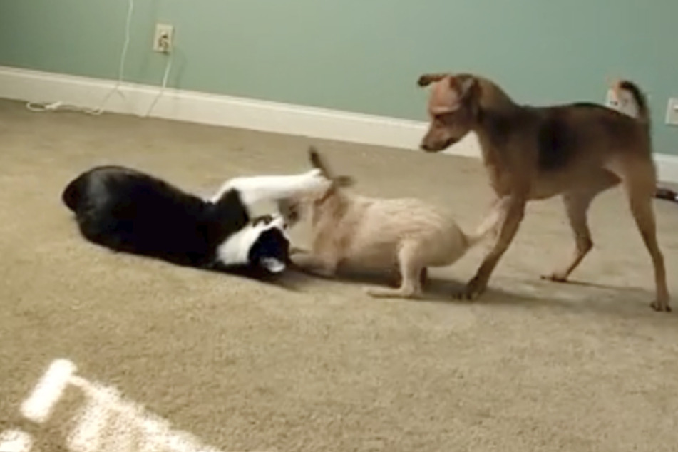 Dog and cat meet the newest family member: their reaction makes everyone laugh