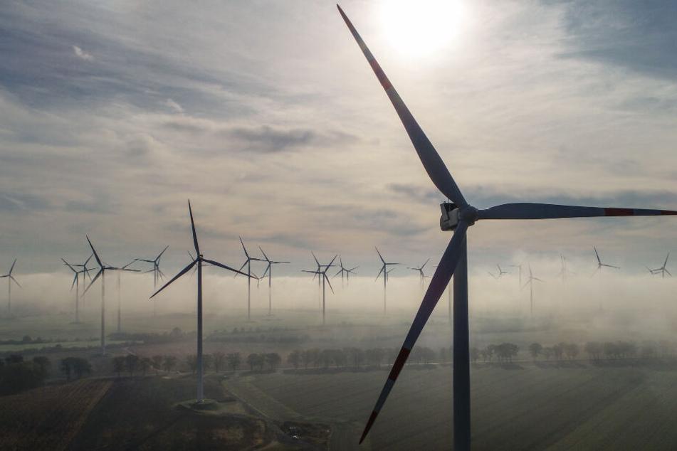 Zahlreiche Windenergieanlagen stehen auf einem Feld. (Archivbild)