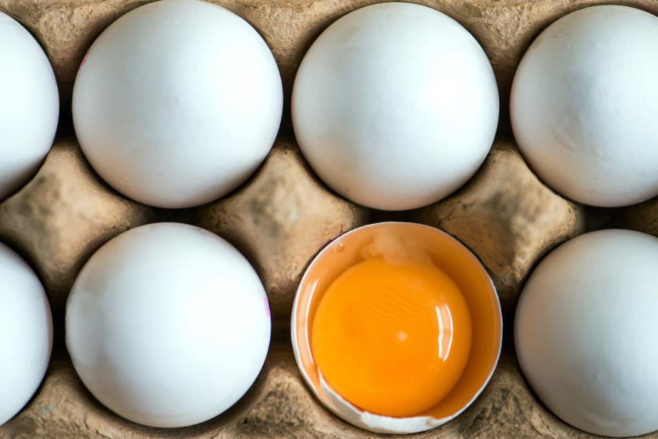 Auch gut acht Wochen später bleibt der einzige Stall Baden-Württembergs, in dem Fipronil-Eier gefunden wurden, gesperrt. (Symbolfoto)
