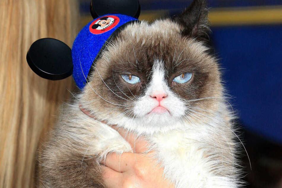 """""""Grumpy Cat"""" bei einer Filmpremiere im Jahr 2015."""