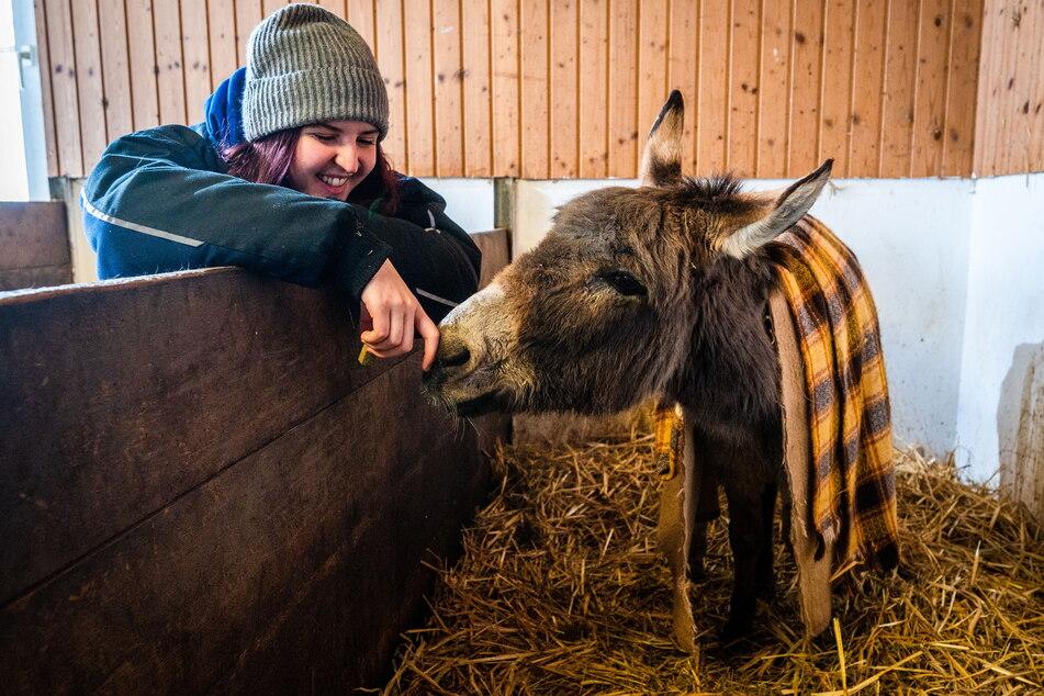 Auszubildende Josephine Nöbel (20) kümmert sich liebevoll um Mini-Esel Chuck.