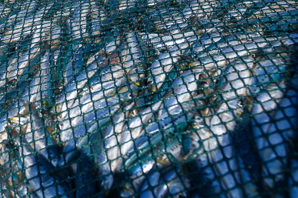 """Ein """"entsorgtes"""" Fischernetz """"überlebt"""" bis zu 600 Jahre im Meer!"""