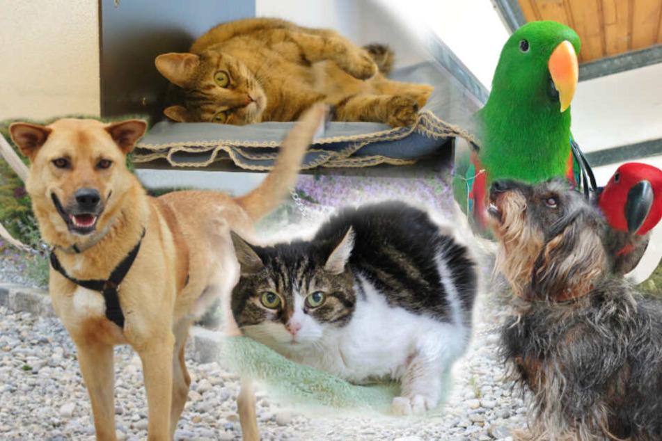 Zu lange im Tierheim: Diese 6 armen Haustiere will niemand haben