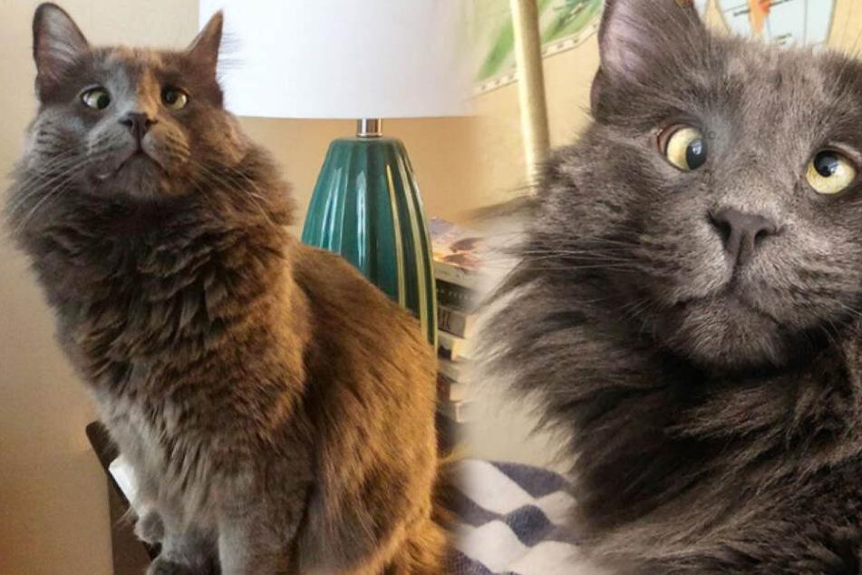 Katze ist ein Internet-Star, doch was stimmt mit ihren Augen nicht?