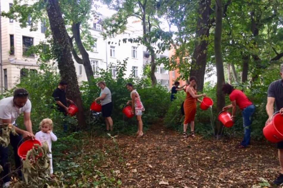 Freiwillige Helfer gießen die Bäume Kölns und schützen sie so vor dem Vertrocknen. Im Sommer 2019 regnet es in Köln erneut zu wenig.