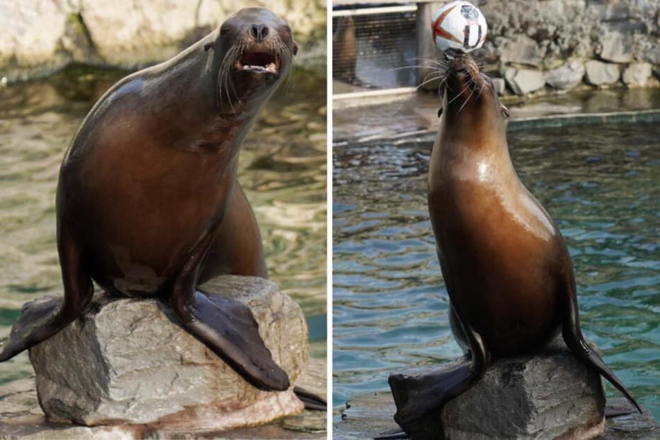 """Leider hat """"Astrid"""" nur den Unentschieden-Ball aus dem Becken gefischt."""