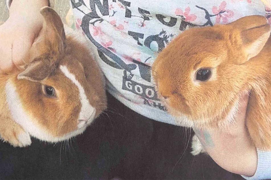 Erbse und Möhre sind nicht die einzigen Kaninchen, die diesen Monat in Pirna verschwanden.