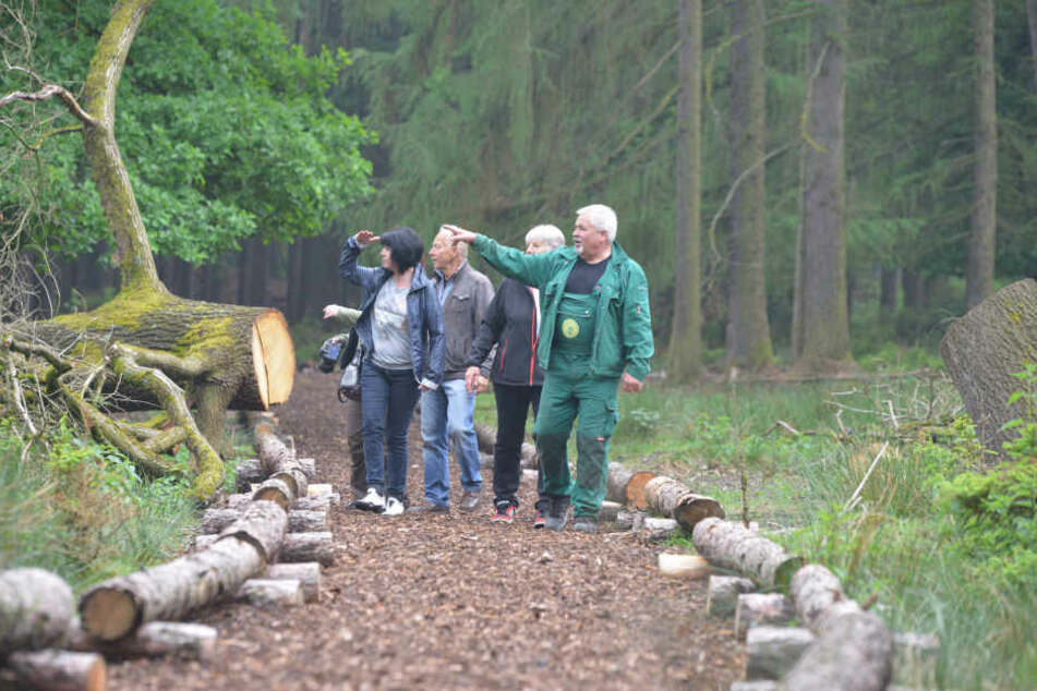 Neuer Besucherpfad im Wildgatter Rabenstein. Revierleiter Gerhard Wittig (62) und Mitglieder des Fördervereins eröffneten die Attraktion am Mittwoch.