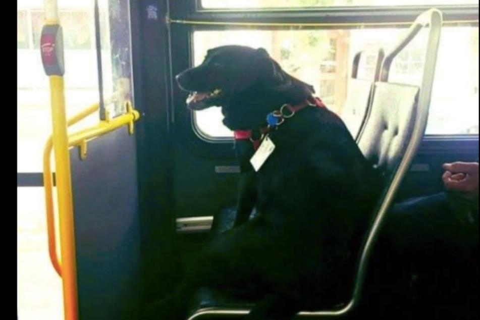 Eclipse ist sehr selbstständig und fährt allein zum Hundespielplatz!