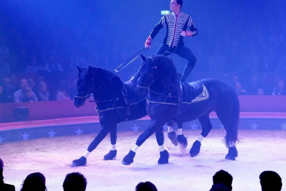Ivan Knievom Schweizer National-Circus Gebrüder Knie zeigt am 07.12.2017 bei der Premiere der 25. Ausgabe des Weltweihnachtszirkus in Stuttgart eine Pferdedressur. (Archivbild)