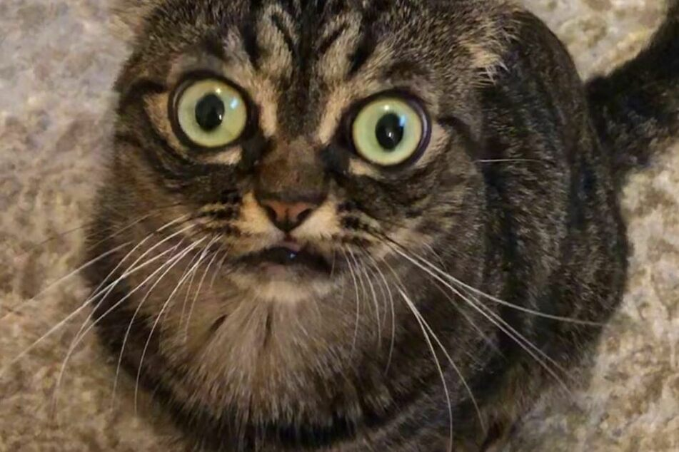 Auf Instagram gewinnt Katzia immer mehr Anhänger für sich.