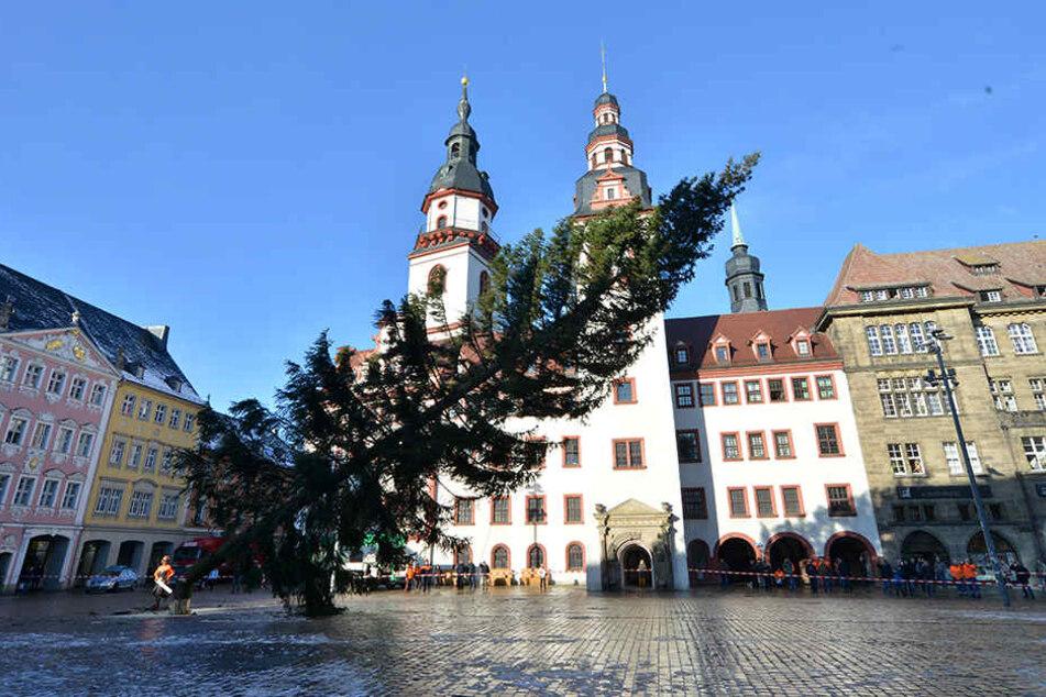 Punkt 13.00 Uhr wird der Weihnachtsbaum auf dem Chemnitzer Markt gefällt.