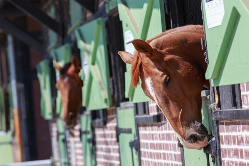 Aus der Box stahl der Unbekannte das Pferd. (Symbolbild)