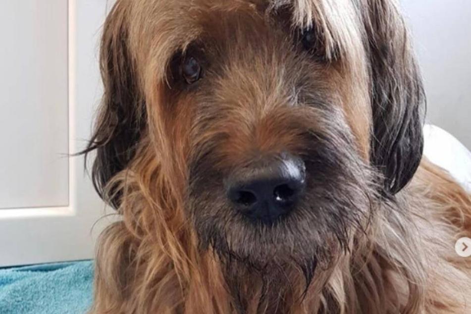 Carmen Geiss über Drama um Familienhund Dex: Habe viel geweint