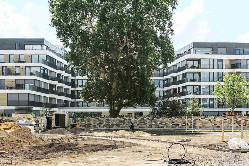 Trotz großer Hitze: Im neuen Herzogin Garten sprießt das Grün