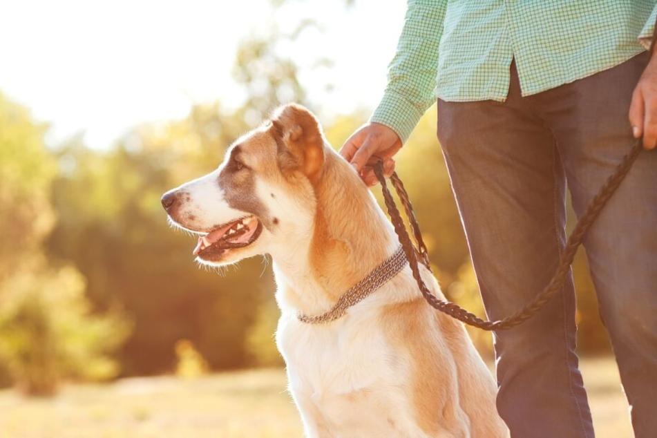 Mehrere Hunde sollen von dem Gift gefressen haben. (Symbolbild)