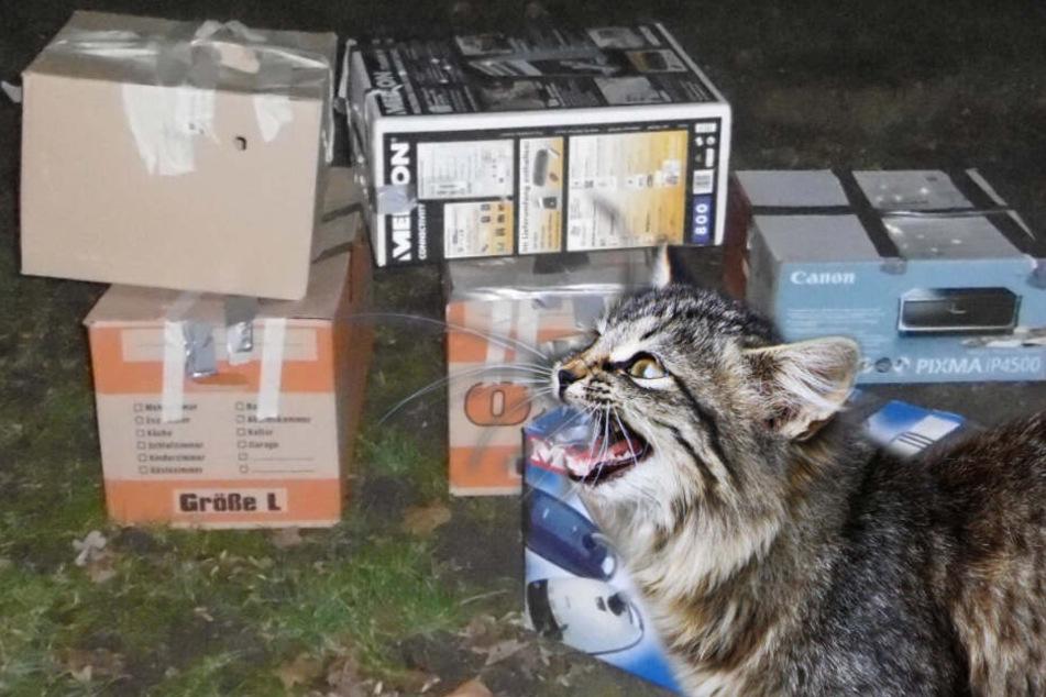 Wie herzlos! Katzen in Kartons eingesperrt und vor Haus abgestellt