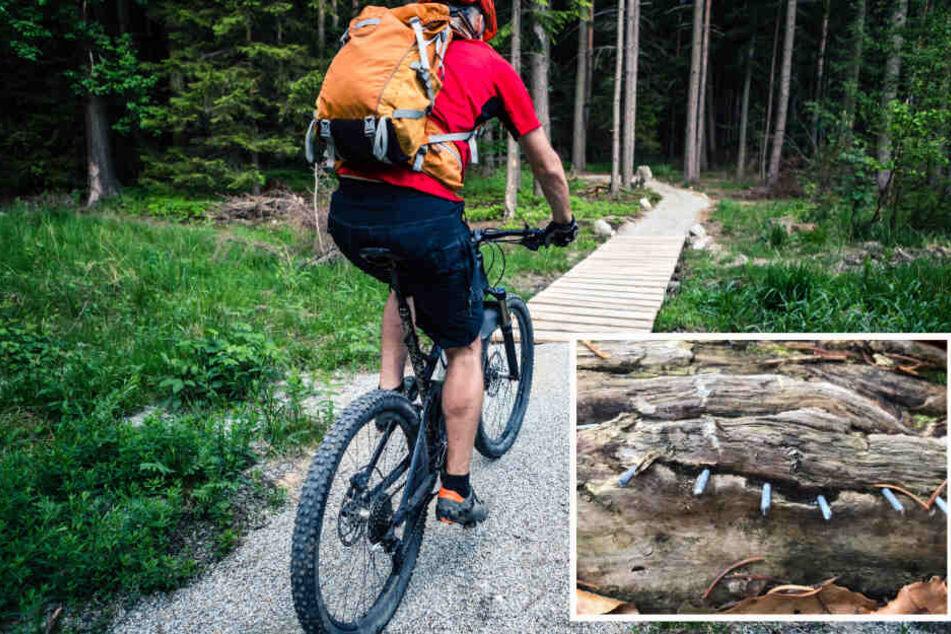 Achtung Lebensgefahr! Unbekannte legen Nagel-Fallen auf Mountainbike-Strecke