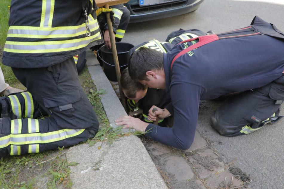 Feuerwehrleute holten die kleinen Tierchen aus dem Gully.
