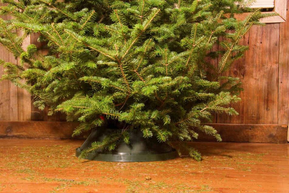 Ist die Weihnachtszeit vorbei, muss auch der Baum bald das heimische Wohnzimmer verlassen.