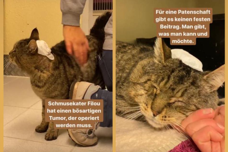 Um Kater Filous Behandlung zu finanzieren, ist das Tierheim Köln-Dellbrück auf der Suche nach Paten.