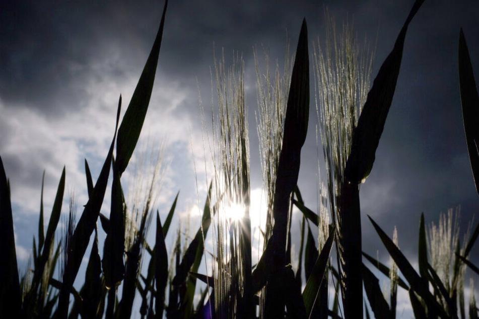 Die Landwirte in NRW freuen sich nach einem deutlich zu trockenen Monat April über mehr Regen im Mai.