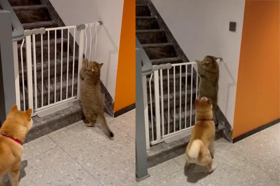 Katze versucht abzuhauen: Was dieser Hund dann macht, ist einfach zum Totlachen