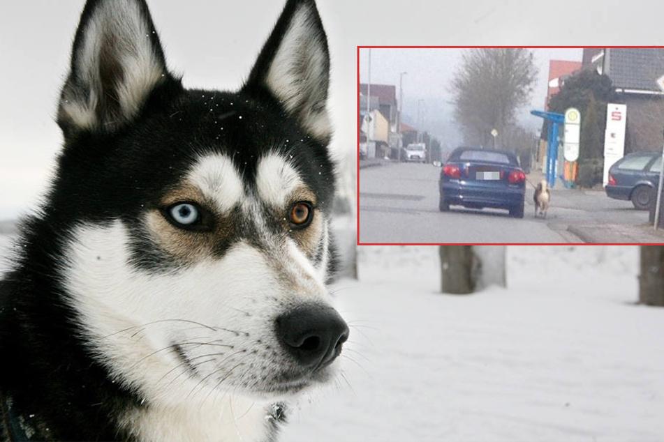 Zu faul zum Gassi gehen? Hund mit Auto ausgeführt