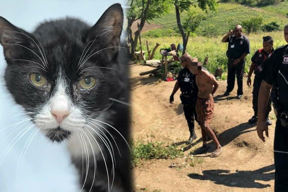 Besitzerin geschockt: Mann wegen Vergewaltigung ihrer Katze verhaftet