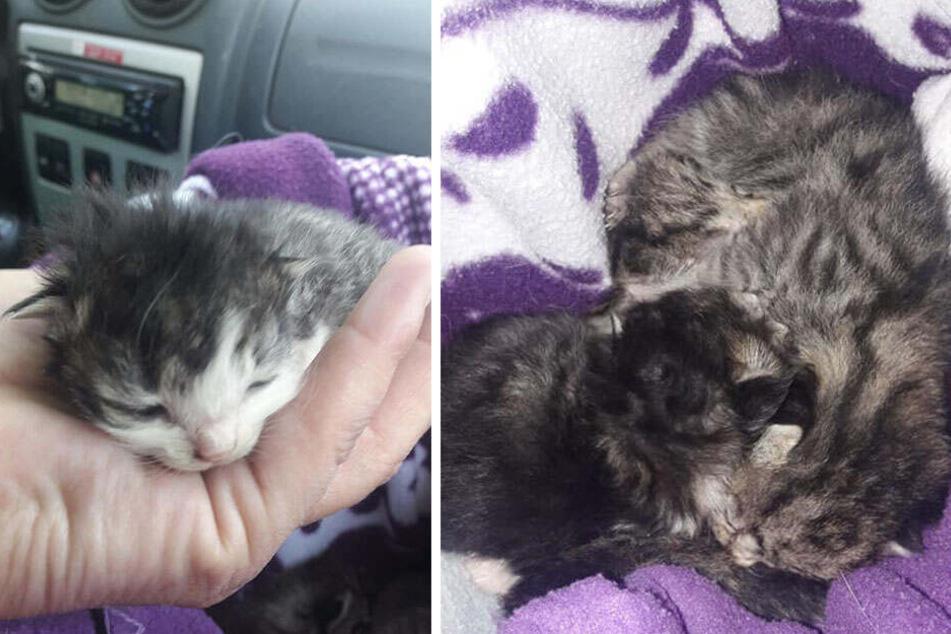 Die Katzenbabys wurden einfach in einer Papiertüte entsorgt.