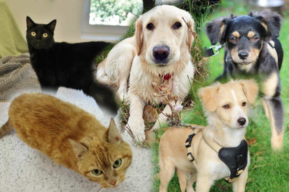 Tieresucheneinzuhause Hunde