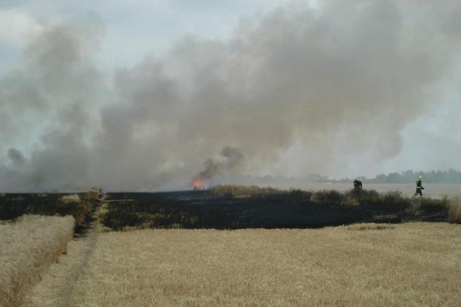 Die anhaltende Trockenheit lässt derzeit viele Felder und Wälder in Flammen aufgehen. So auch dieses Getreidefeld bei Köthen (Anhalt).