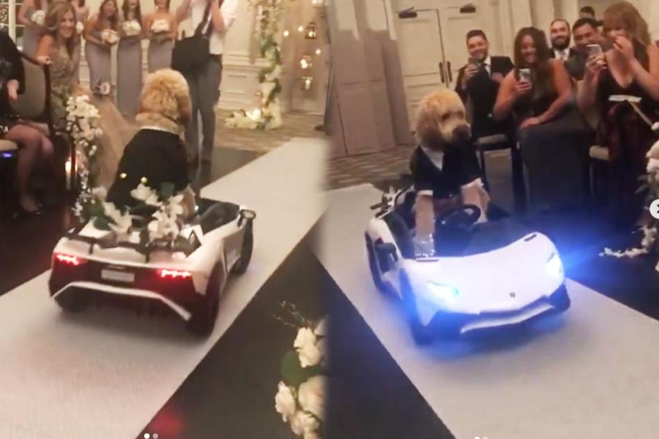 Mit einem weißen Lamborghini fuhr Frankie vor.