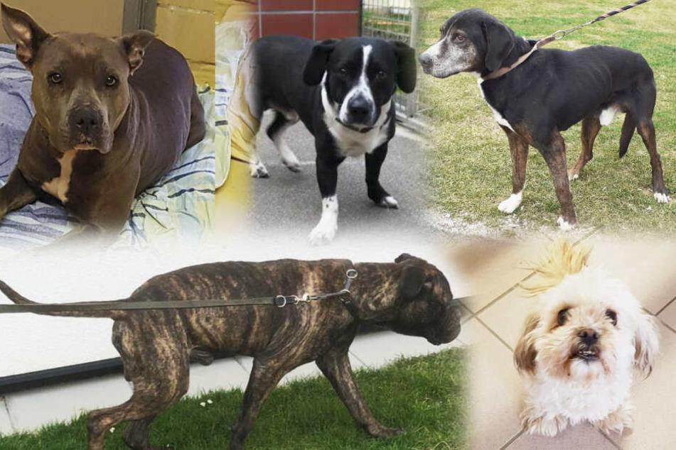 Trauriger Rekord: So viele Hunde wurden noch nie in einer Woche ausgesetzt!