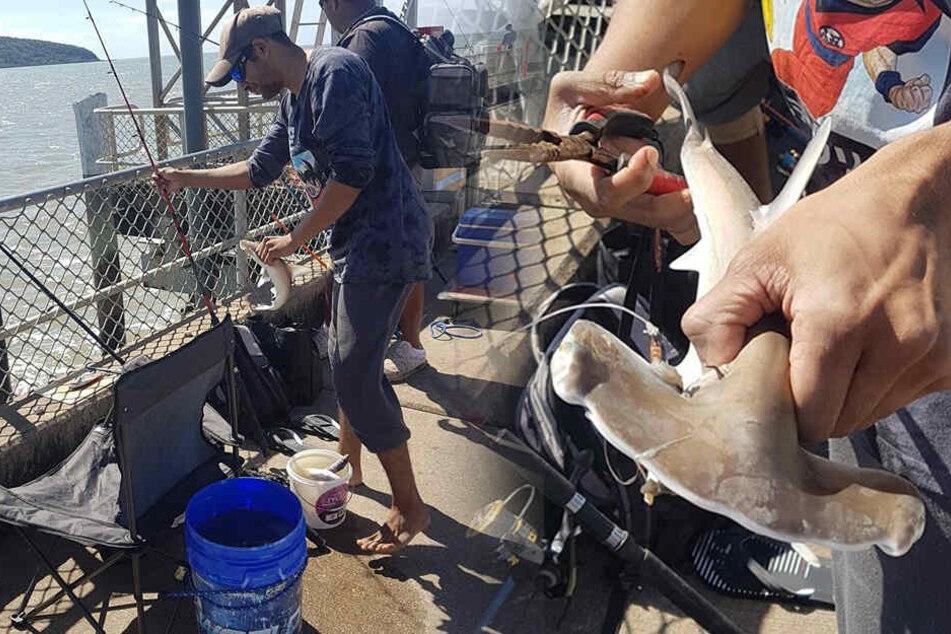 Zeuge kann nicht glauben, was Angler vor seinen Augen mit Baby-Hai anstellt
